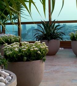 miami_rooftop_terrace_garden_by_FosterPlants1100_4501