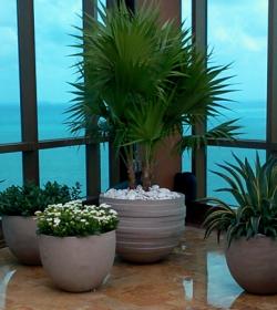 rooftop_terrace_garden_miami_by_FosterPlants_1100_434