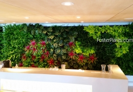 FosterPlants_One_living_wall_logo