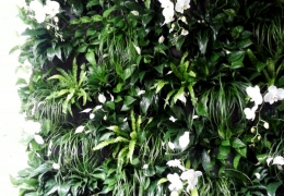 FosterPlants_easy_living_plant_wall_singer_two