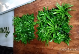 easy_plant_wall_from_FosterPlants.com_Miami