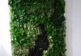 miami-beach-plant-wall-FosterPlants