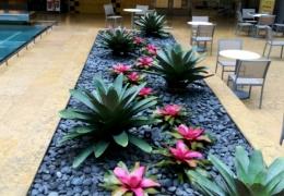 terrace-plants-miami-florida-by-FosterPlants