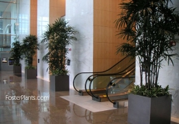 Commercial Building Lobby