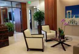 Fosterplants.com_office-plants_miami_florida_rhapis_palm