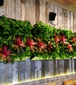 miami_easy_plant_wall_from_FosterPlants