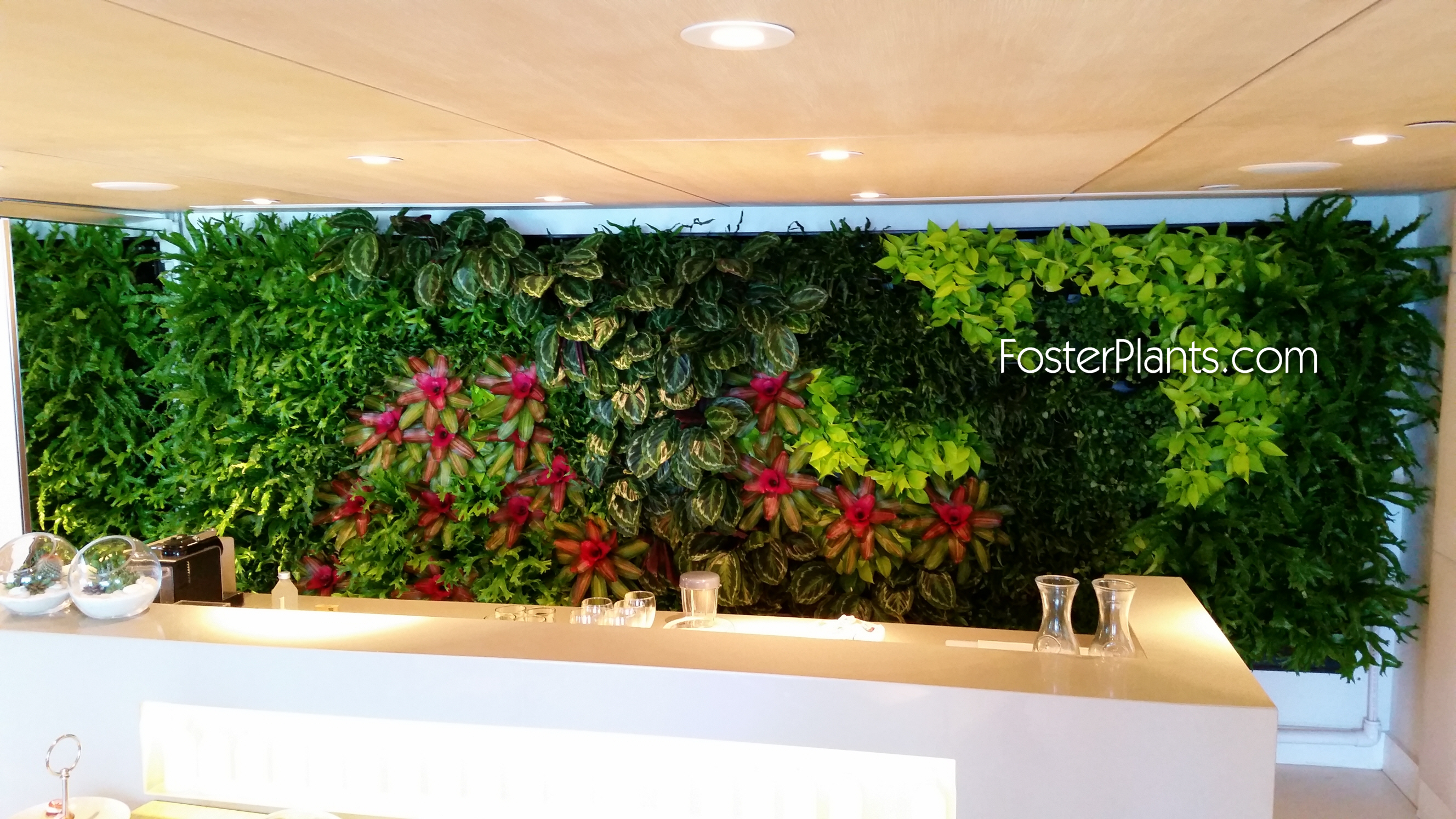 Living walls miami interior plant service office plant - How to make a living wall ...