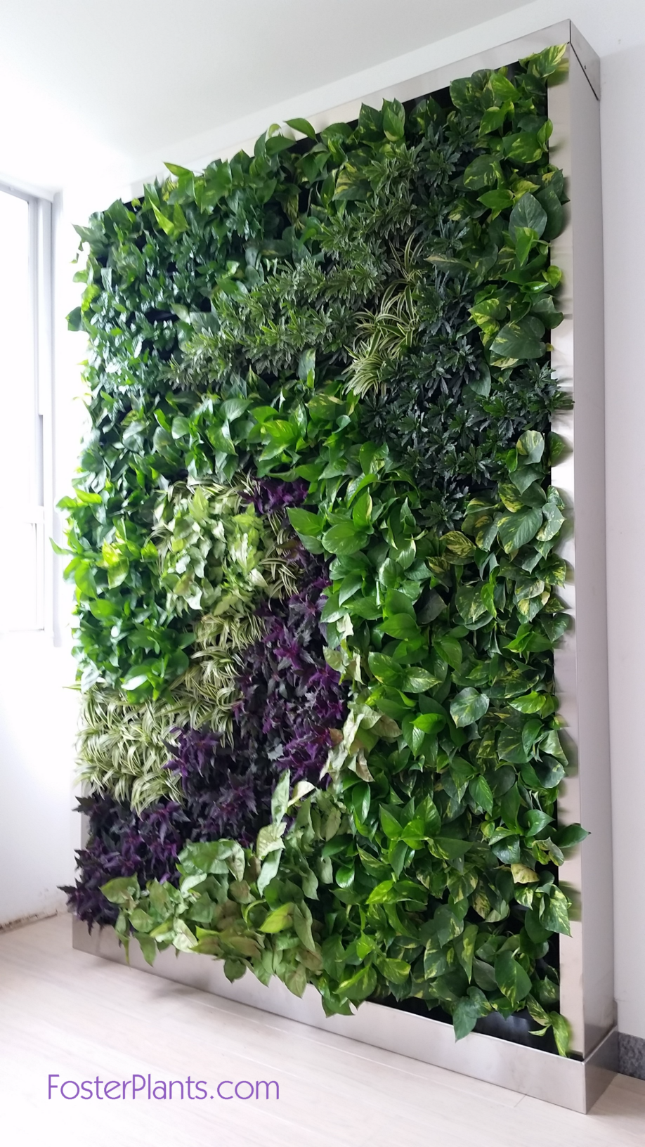 Living Plant Wall Miami FosterPlants