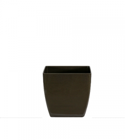 pheo-short-square-planter-FosterPlants