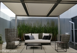 FosterPlants_Miami_Terrace_scaping