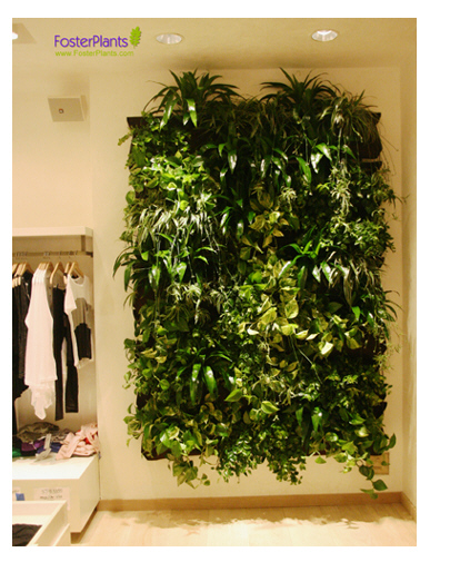Fosterplants_wallywall_splendid_store_frm